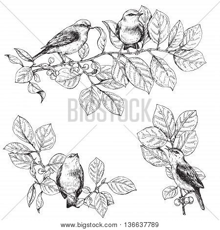 Hand drawn birds sitting on branches. Monochrome set of songbirds. Black and white elements for coloring. Vector sketch.