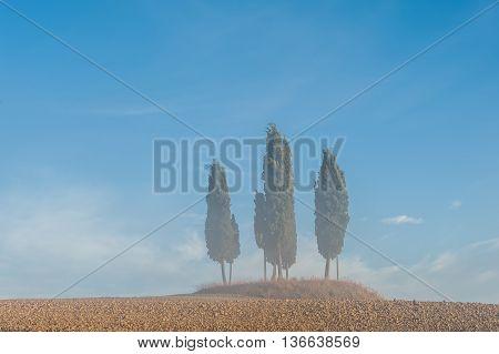 Cypress Trees On Field