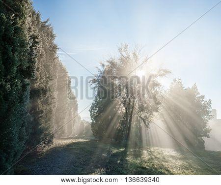 Sun Rays Through The Tree