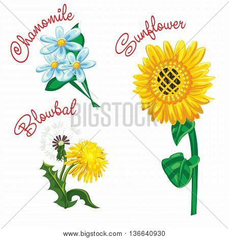 Summer flowers of the field with the signature selected objects in vector format EPS