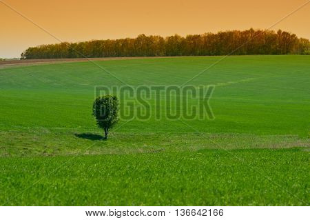 lone tree in a green field rural landscape