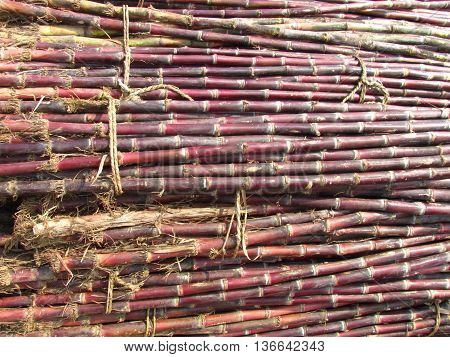 closeup of bunch of sweet sugarcane tied in rope
