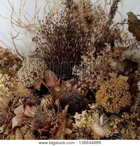 Masses of dried seed heads and flowers collected from the autumn hedgerows