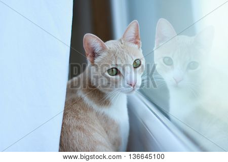 Young red cat and its reflection on a window
