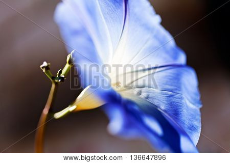 Sunshine In The Blue Bellflower