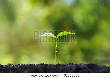 tree growing on fertile soil with green and yellow bokeh background / nurturing baby plant / protect nature