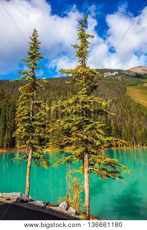 Beautiful lake with blue - green water, surrounded by wooded mountains. Emerald Lake, Yoho National Park, Canada