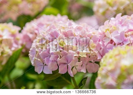 Garden Flower In Summer Day