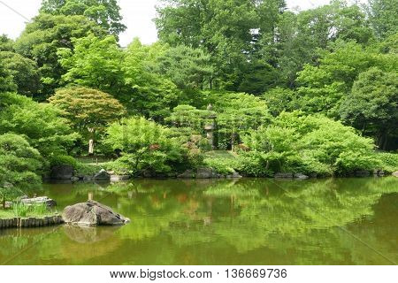 Plants, Water Pond With Reflection In Japanese Zen Garden