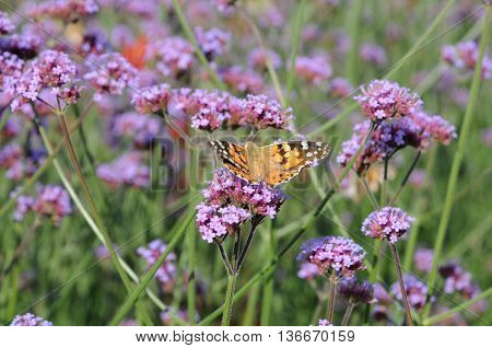 colourfull summer in a nice German garden