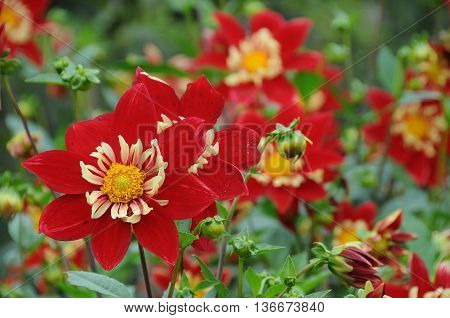 many flowers at the lake constance in germany