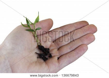 the green sprout in hand on a white background
