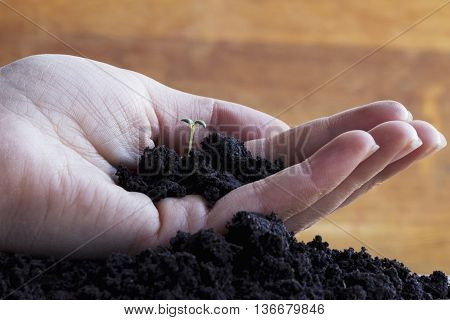 the green sprout and soil in a hand