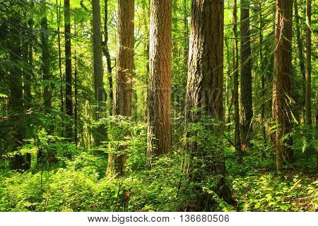 a picture of an exterior Pacific Northwest forest in summer