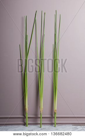 Artificial sedge near the gray wall for decoration