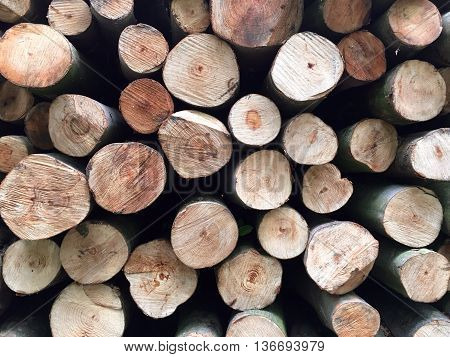 Stacked tree trunks for timber industry, closeup