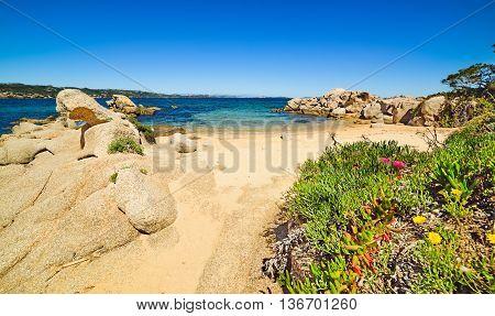 rocks and flowers in Cala dei Ginepri Sardinia