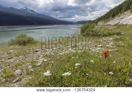 Mountain Lake And Wildflowers - Jasper National Park, Canada