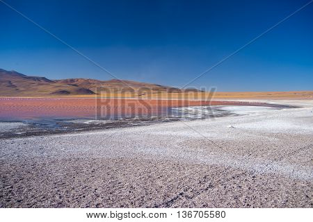 Multicolored Salt Lake With Flamingos On The Bolivian Andes