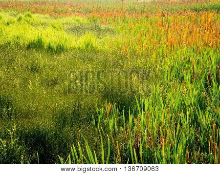 A variety of colors and textures in marsh grasses