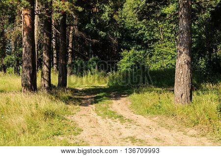 Country dirt road between pine trunks in summer forest
