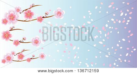Branches of sakura with flowers. Cherry blossom branches with petals falling on Light Branches of sakura with flowers. Cherry blossom branches with petals falling on Light Violet color background. Vectoriolet color background. Vector