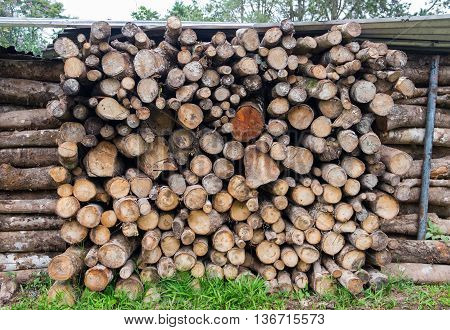 Pile of logs for wood texture background.