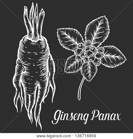 Ginseng root, leaf, berry, plant. White isolated on black background, chalkboard. Organic ginseng nature chinese and korean herb. Hand drawn engraved sketch vector illustration.