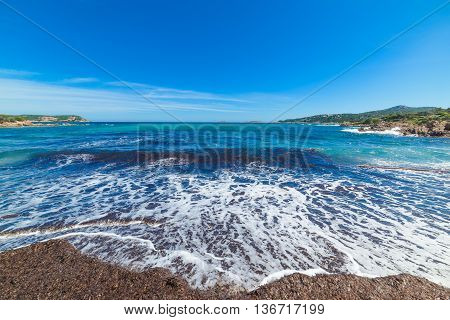 seaweeds in Piccolo Pevero beach in Sardinia
