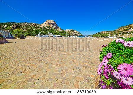flowers in Poltu Quatu resort in Costa Smeralda Sardinia