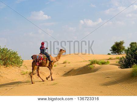 Cameleer  In Desert