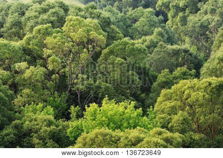 Green trees crowns high angle view background