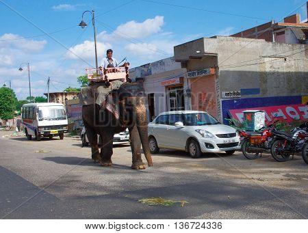 Elephant Carry Driver On Street