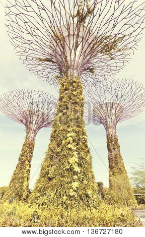 SINGAPORE - JULY 14, 2014: The Supertree Grove at Gardens by the Bay. One of the most popular tourist destinations in Singapore. Vintage mood style.