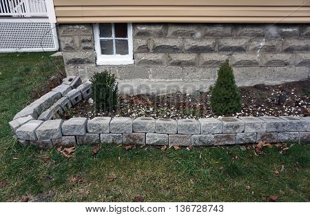 A dwarf Alberta spruce tree (Picea glauca `Conica´) and a boxwood bush are planted next to the foundation of a home, below a basement window, in Harbor Springs, Michigan.