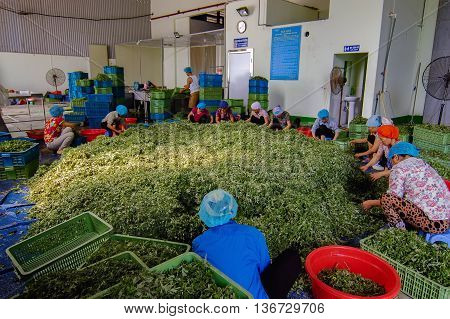 DA Lat, Vietnam, September 12, 2015 Farmers Da Lat, Lam Dong, development of vegetable exports
