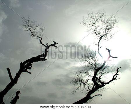 Barron Tree