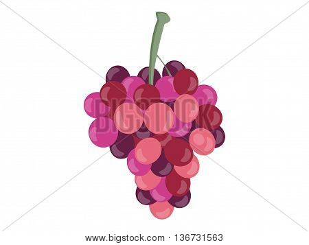 Grapes Isolated On White Background. Bunches Of Grapes. Vector Illustration.