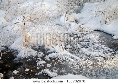 frozen brook with plants in winter frost