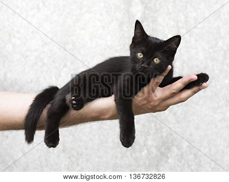 Black kitten lying on a man's hand