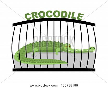 Crocodile In Zoo. Large Alligator In Cage. Green Aggressive Predator In Captivity