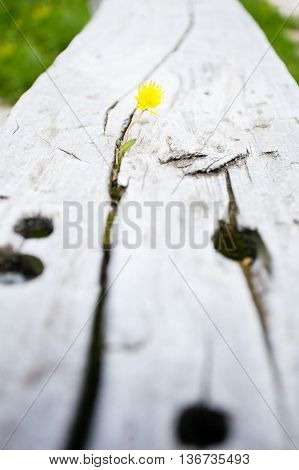 Flower Growing In A Timber Slot