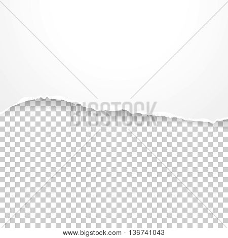Torn paper banner on the transparent background. Vector illustration EPS10