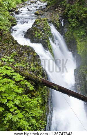 The lush area of the Sol Duc Falls in northwest Washington.