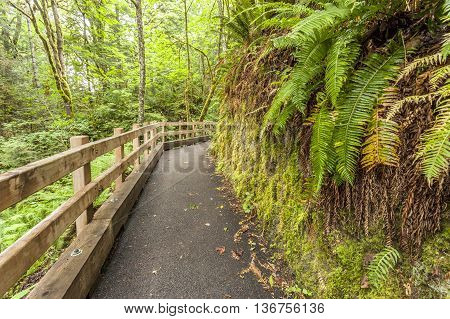 The path leading to Madison Falls in the Olympic Peninsula of Washington.