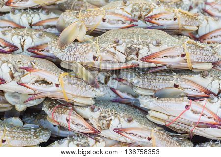 Fresh blue crab in the market, seafood
