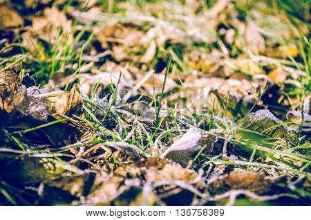 Frozen Autumn Leaves On The Grass