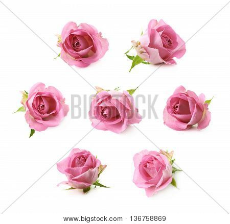 Single pink rose bud isolated over the white background, set of seven different foreshortenings