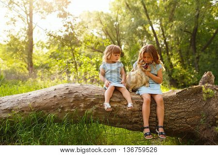 Little girl hugging a pet. Sisters and a dog sitting on a tree. Pedigree dogs Spitz.