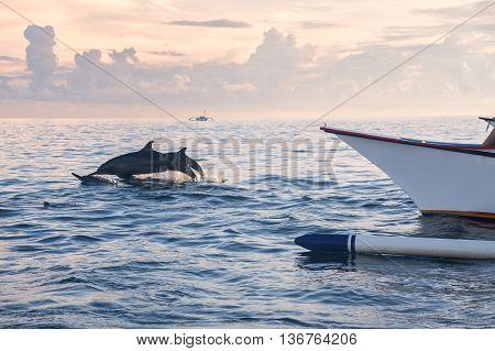Holiday in Bali, Indonesia - Dolphin Beach Lovina Bali, Dolphin Jumping